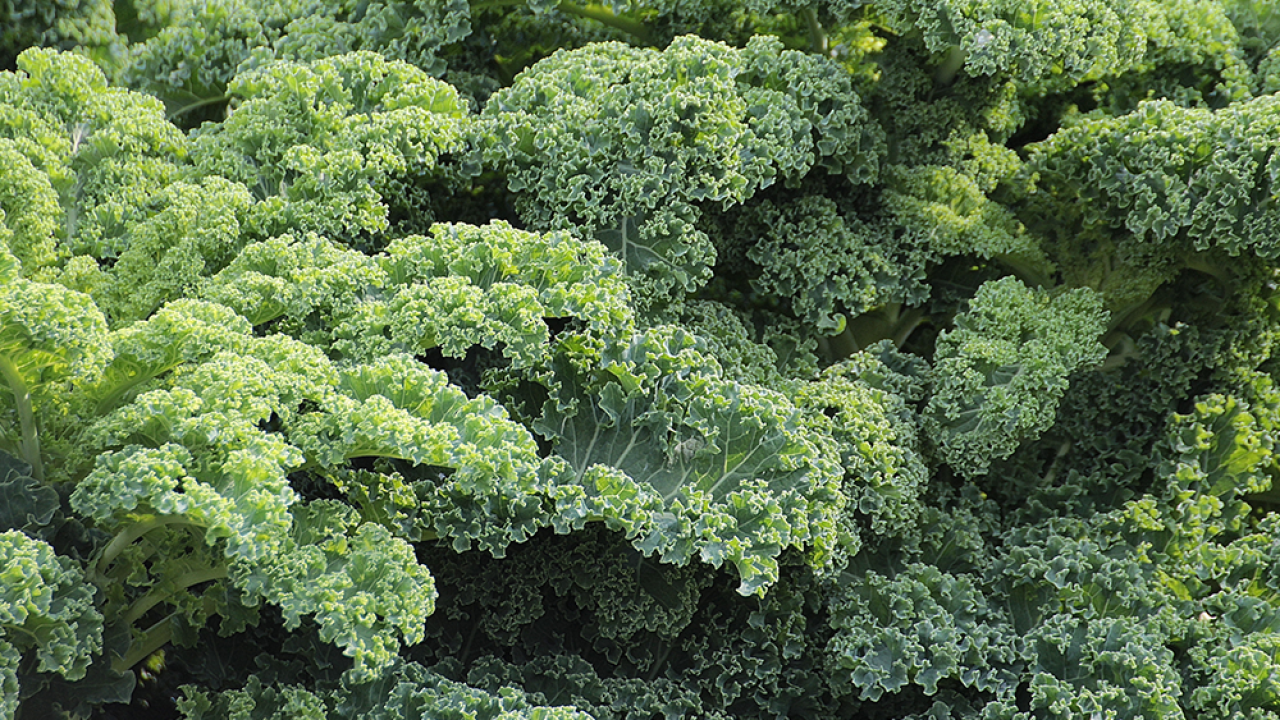Kale joins 'dirty dozen' produce list due to high levels of pesticides