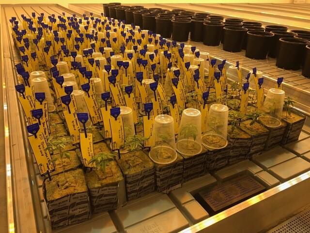 Ohio's medical marijuana Cultivation facilites