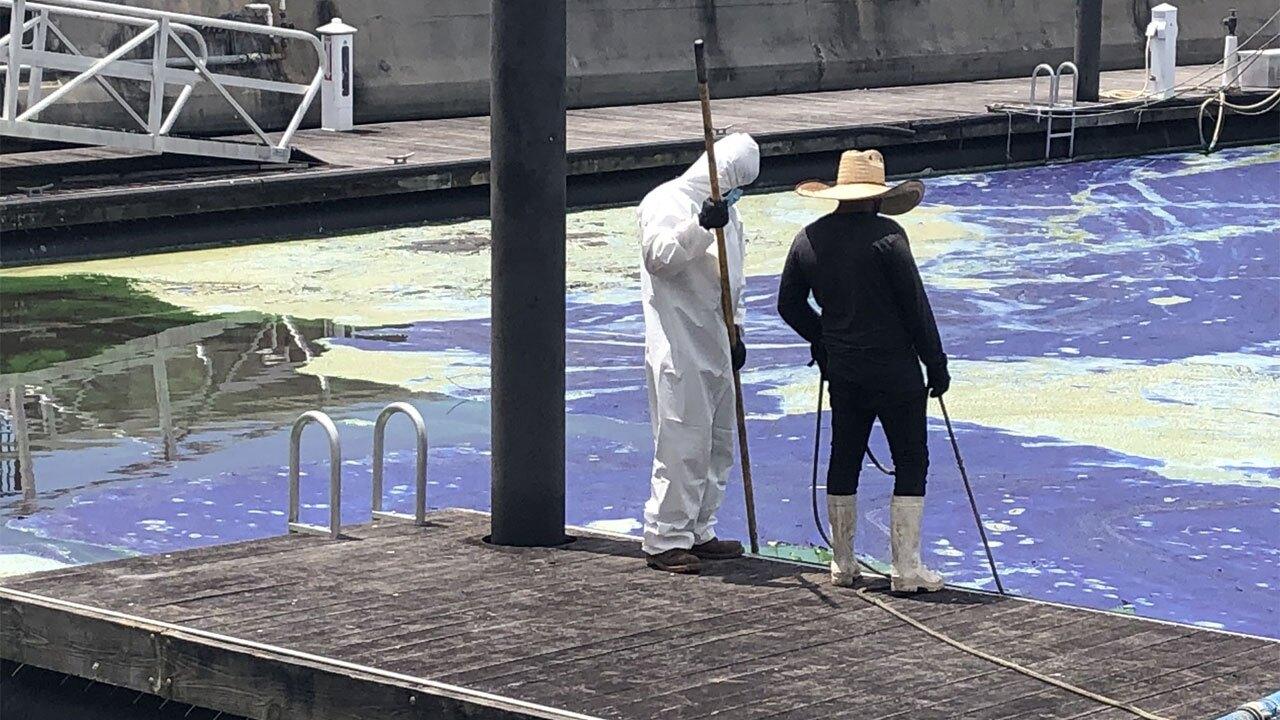 Toxic algae cleanup at Pahokee Marina on April 29, 2021