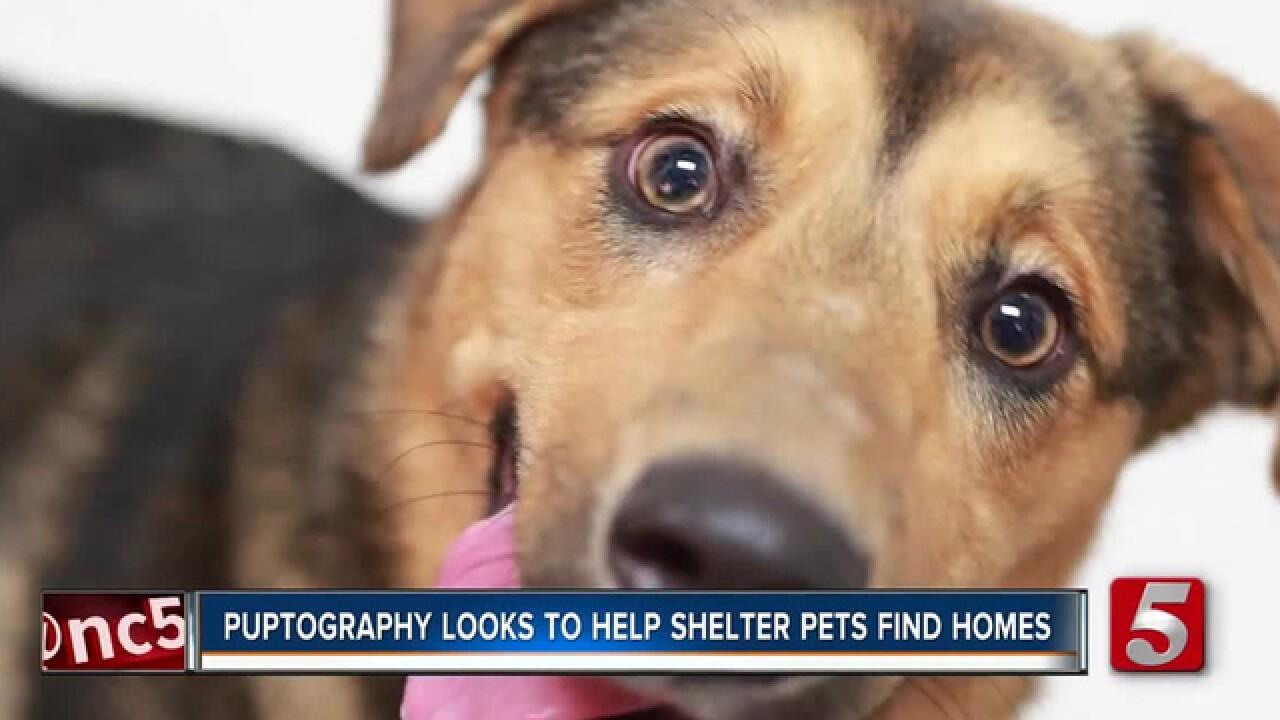 Nashville 'puptographer' helps shelter dogs find forever homes