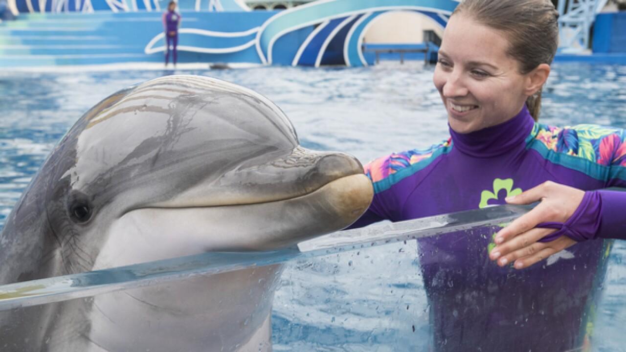 SeaWorld announces new year-round pass