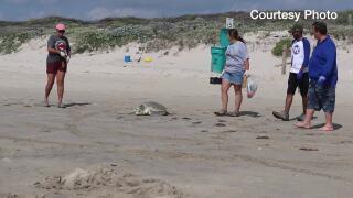 sea turtle nesting.jpg