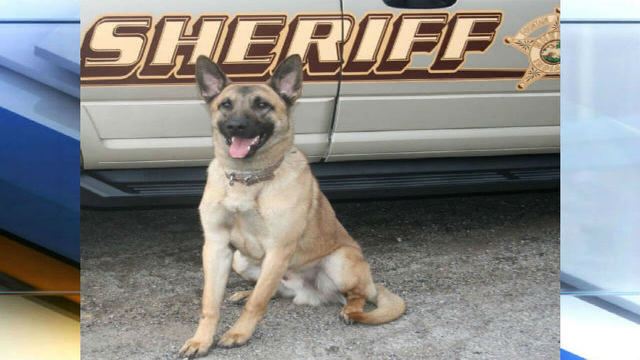 Indiana K-9 dies from heat exhaustion after search, arrest