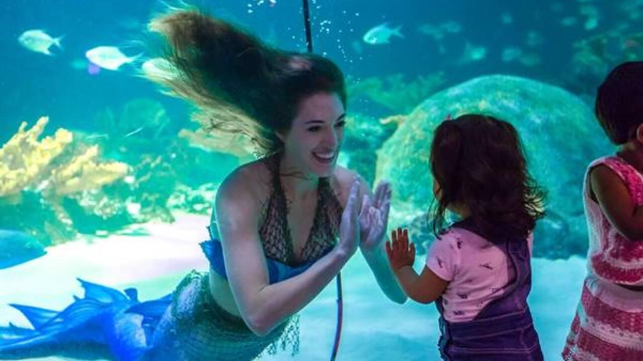 Mermaid Magic Odysea.jpg