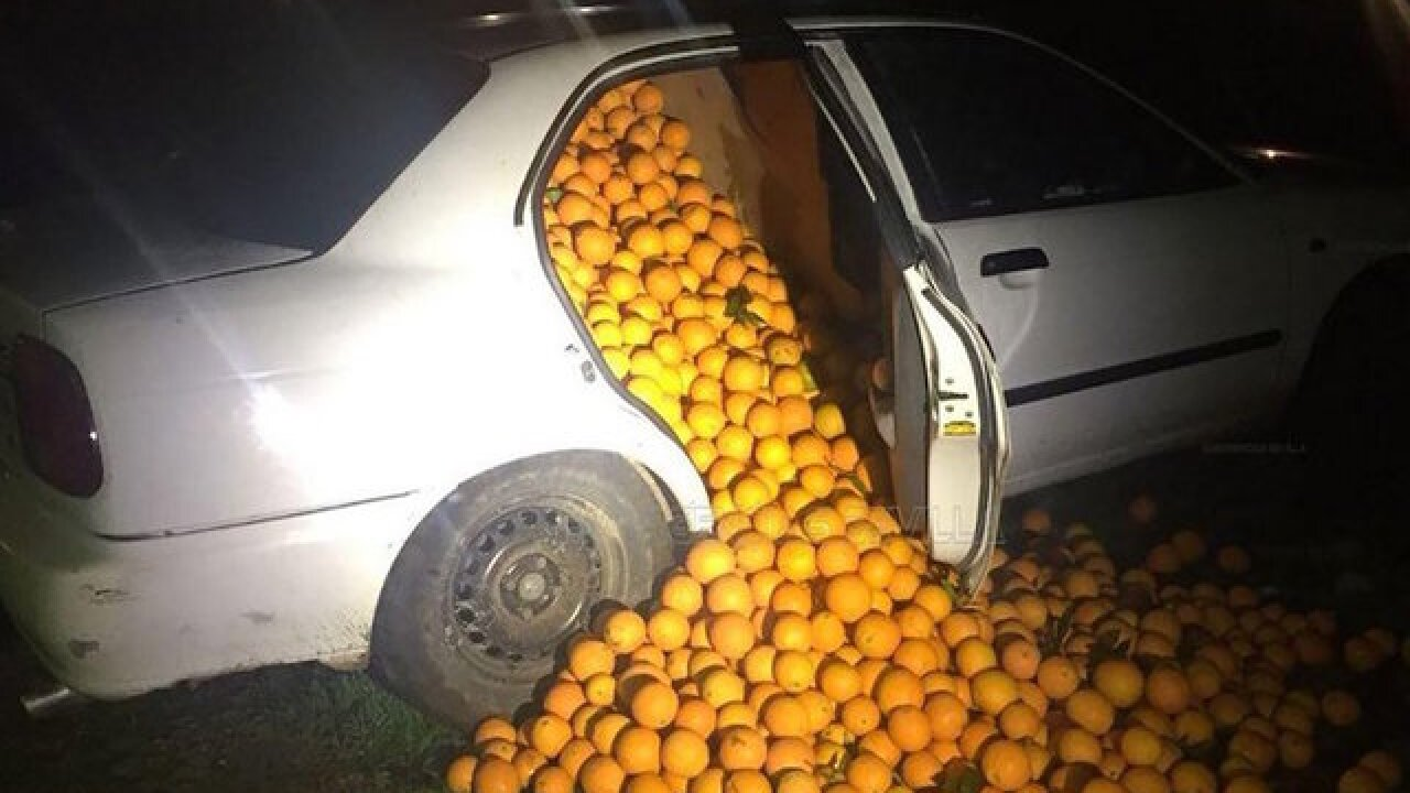 Oranges tumble out of pulled over car in Spain
