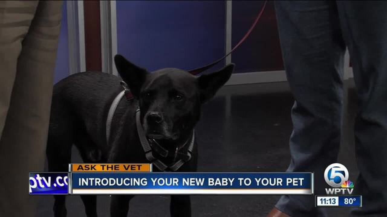 Tips on introducing your new baby to your pet