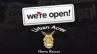 WOO Urban Acres Horse Rescue.jpg
