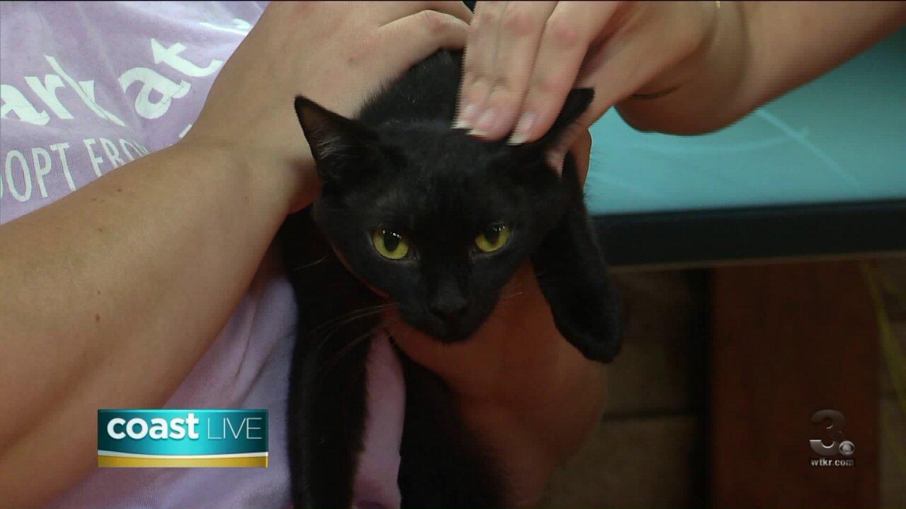 Debunking timely myths about black cats on CoastLive