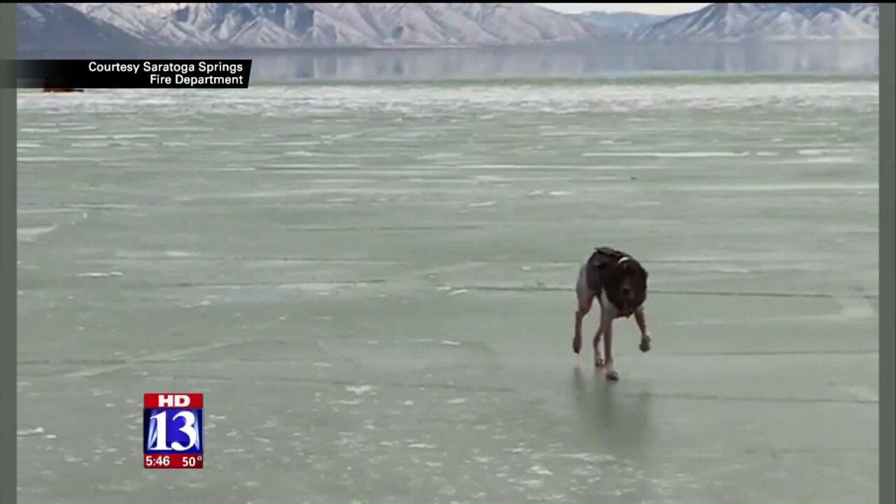 Crews rescue dog that fell through ice at UtahLake