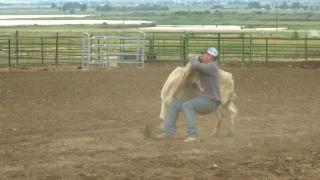 Steer wrestling: A blend of nerves and confidence