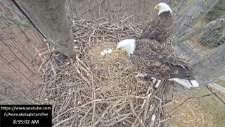 Three eggs in the nest at Redwood.jpg