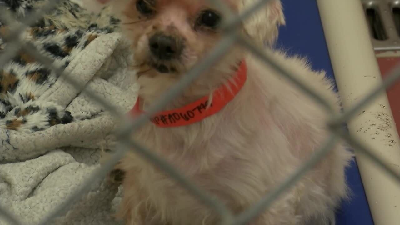 Animal cruelty investigation in Missoula leaves dozens of dogs up for adoption