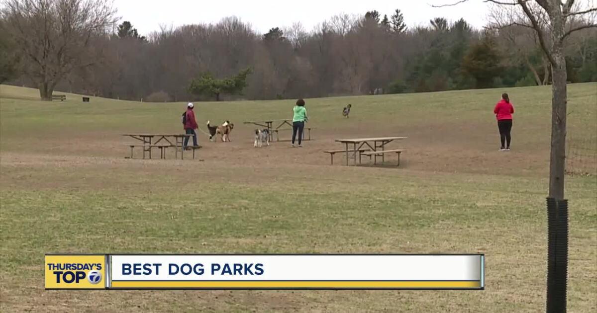 Thursday's Top 7: The best dog parks in metro Detroit