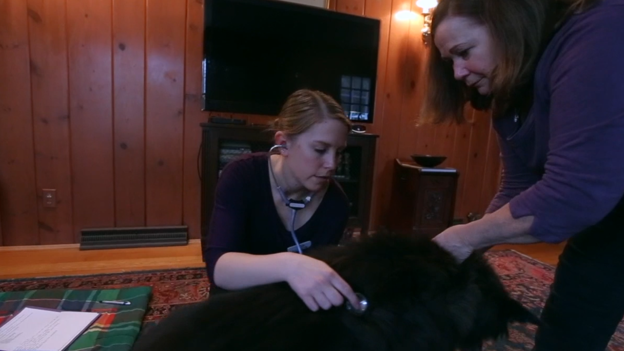 Pet hospice care is a growing trend among pet owners
