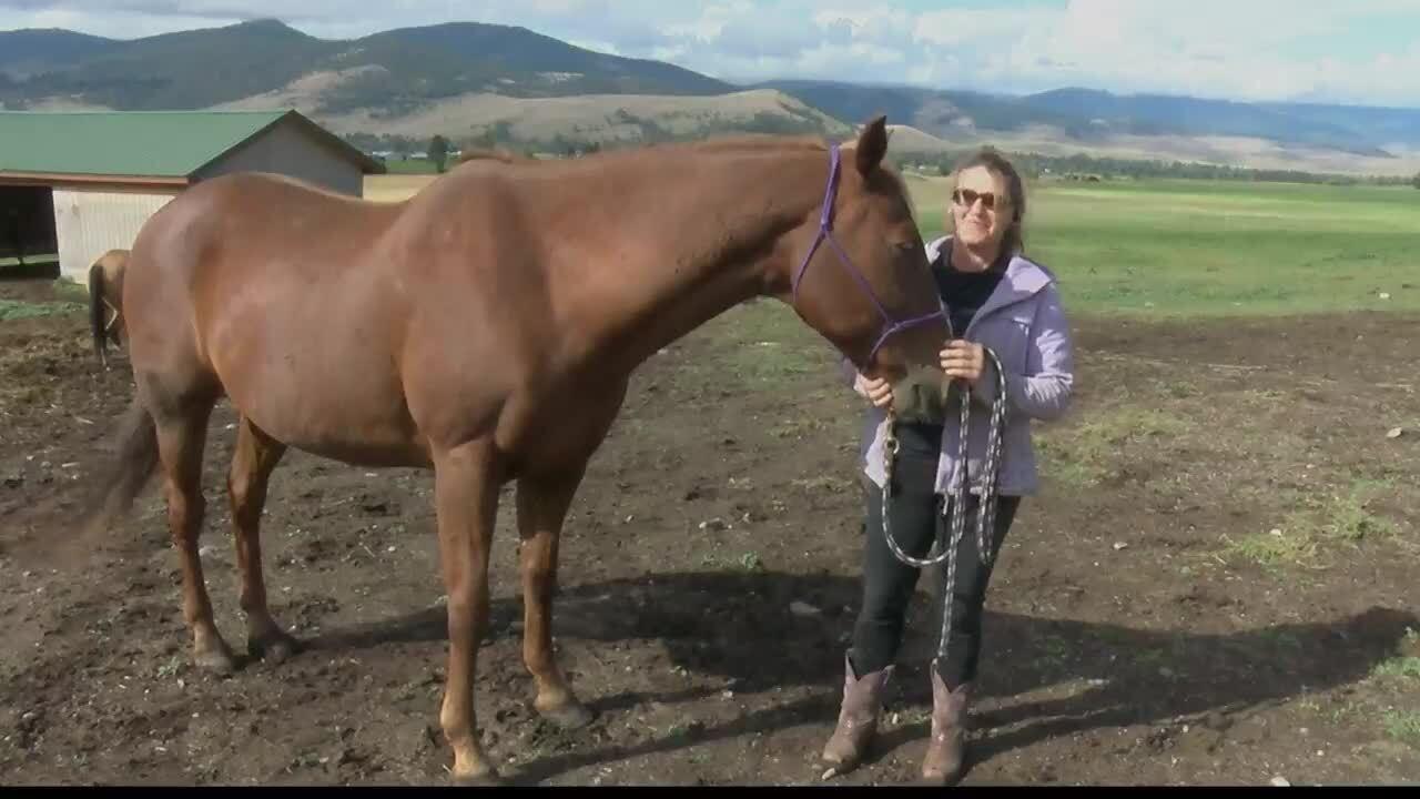 Horse Ranch Fundraiser