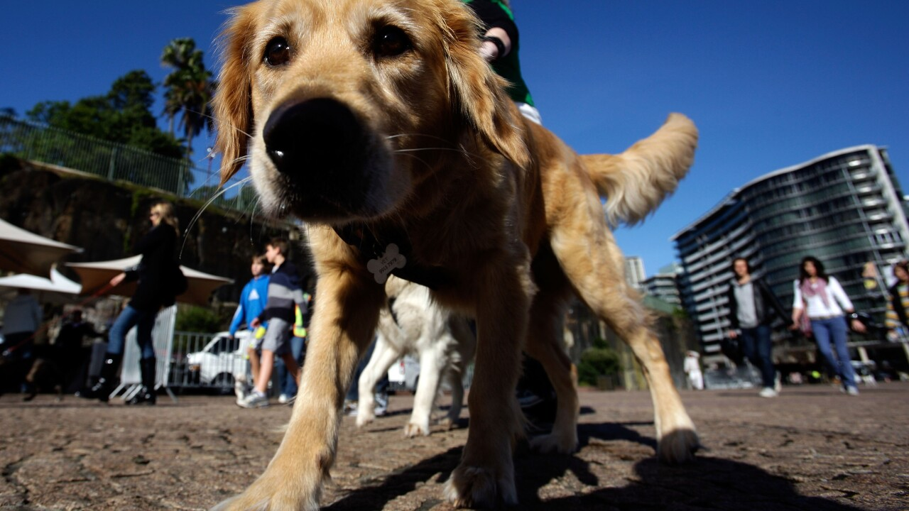 Owning a dog tied to lowering your risk of dying early by 24%, study says