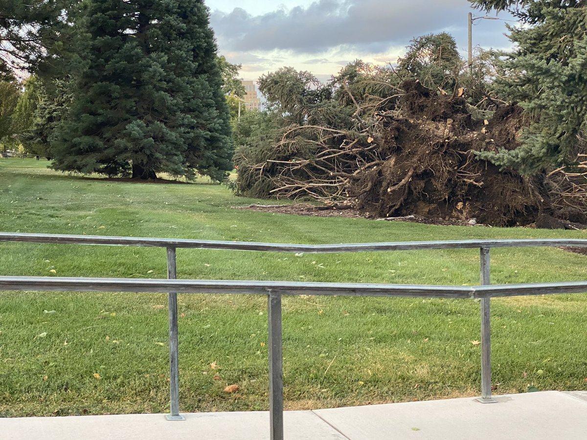 Tree damage on the grounds of the state capitol