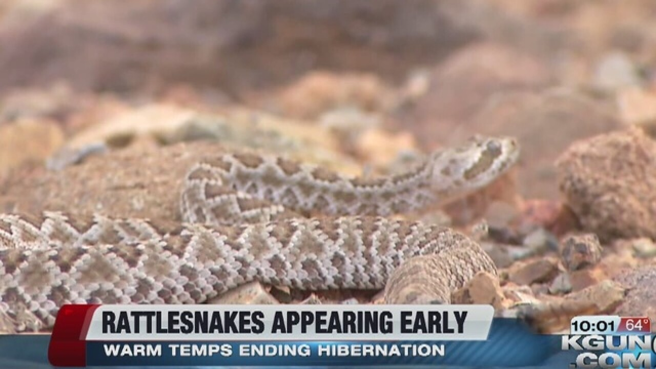 Hot weather brings out the rattlesnakes
