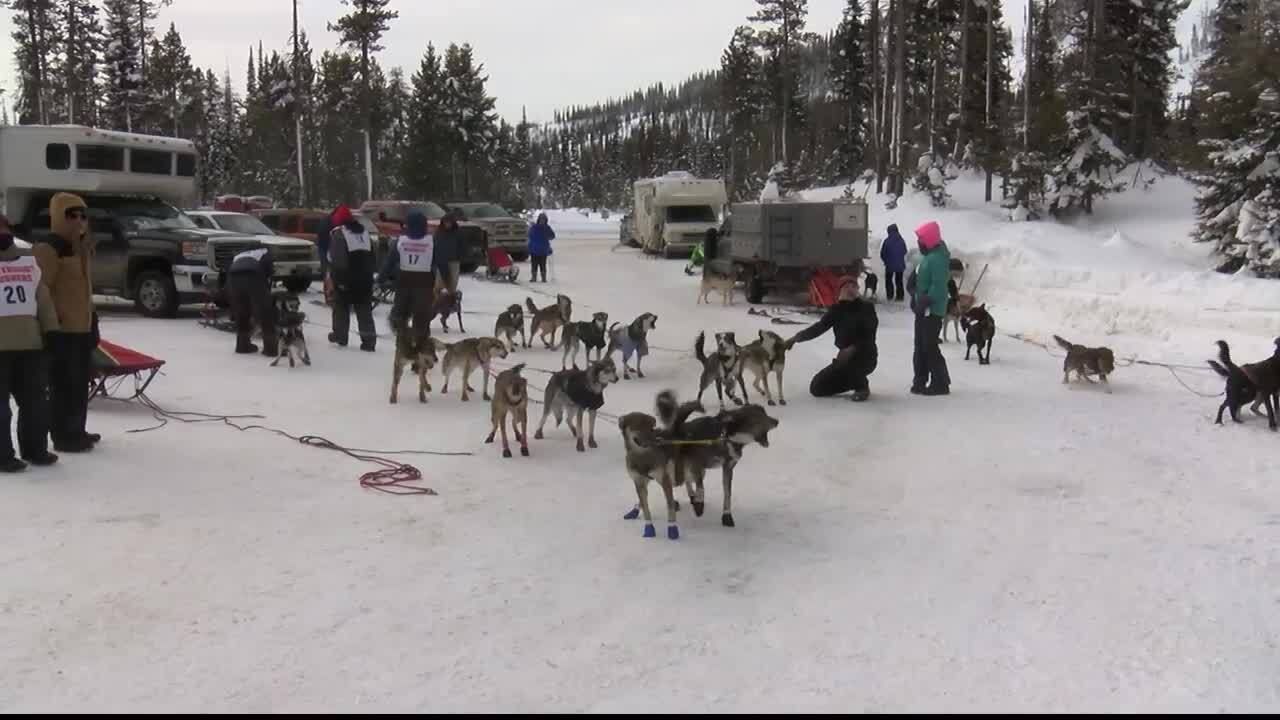 Sled dog races, skijoring competition return to Lost Trail Pass