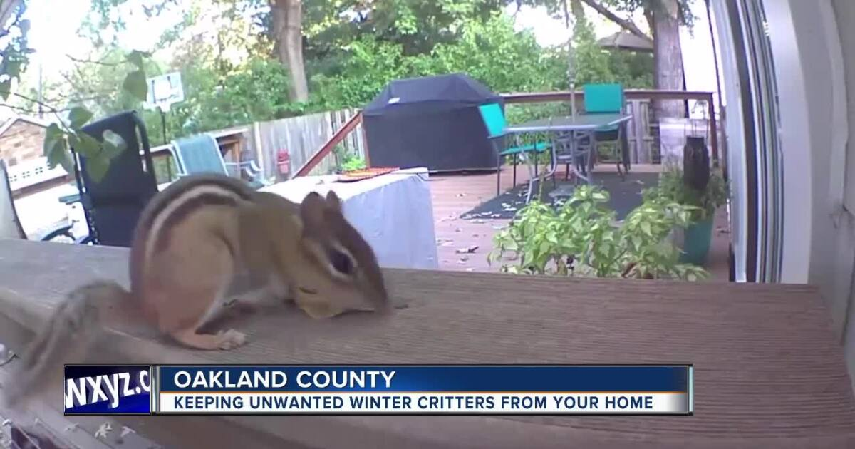 How to keep unwanted winter critters away from your home