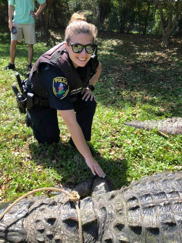 An alligator gator that was almost 12 feet long, weighing 750 pounds and believed to be more than 100 years old was removed from Jupiter Commerce Park on March 28, 2019.
