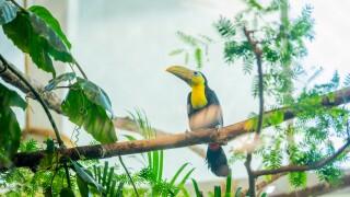 baby toucan 034.jpg