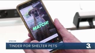 Tinder for shelter pets.jpg