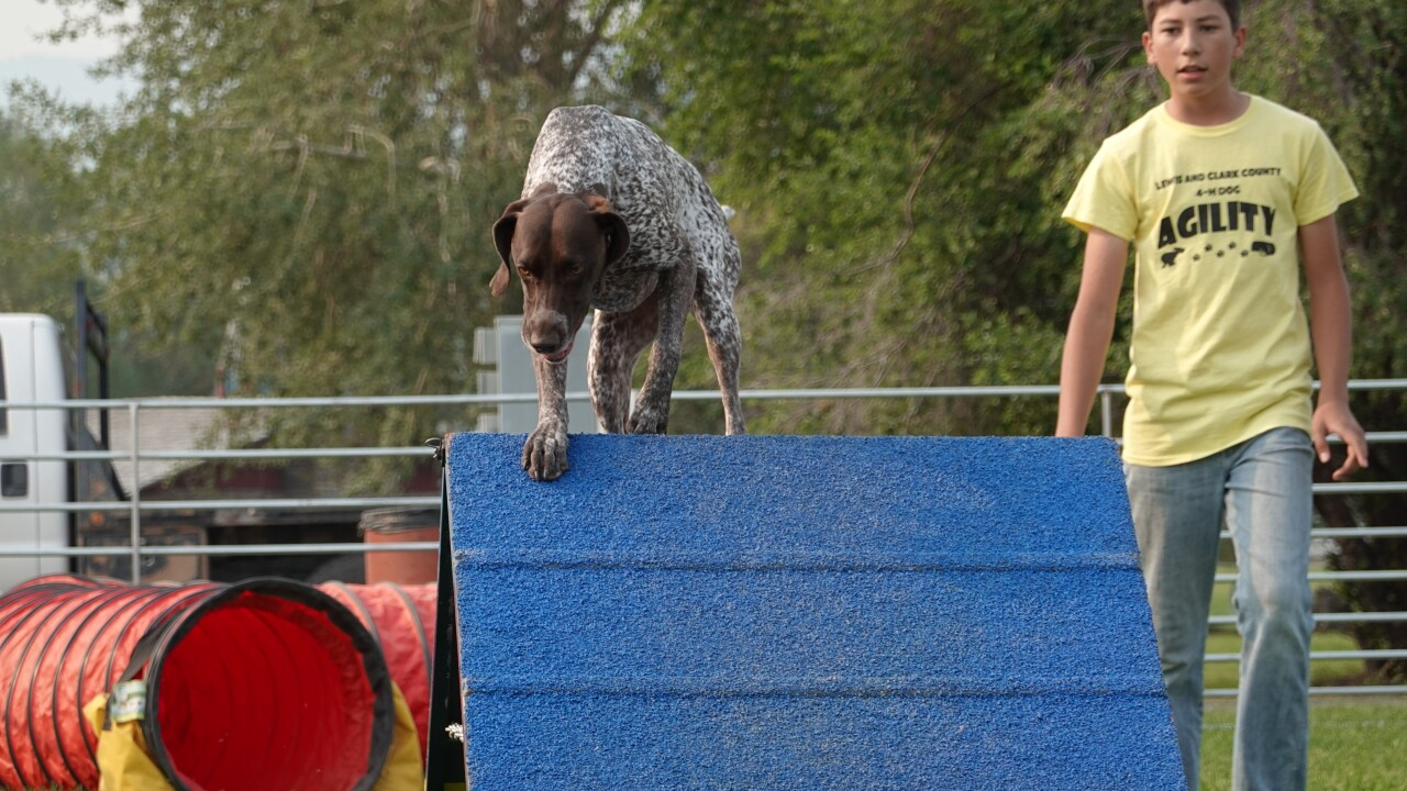 Two and Four-Legged partners take on 4-H dog agility competition