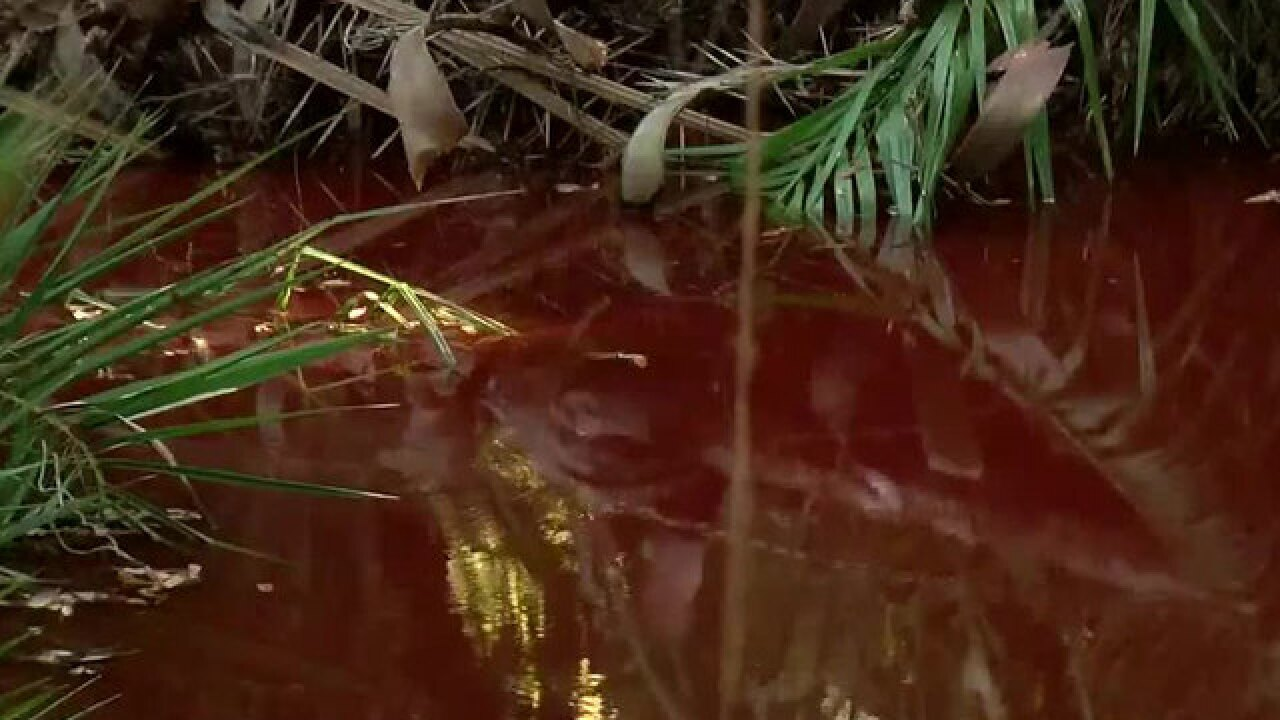 Florida creek turns blood red