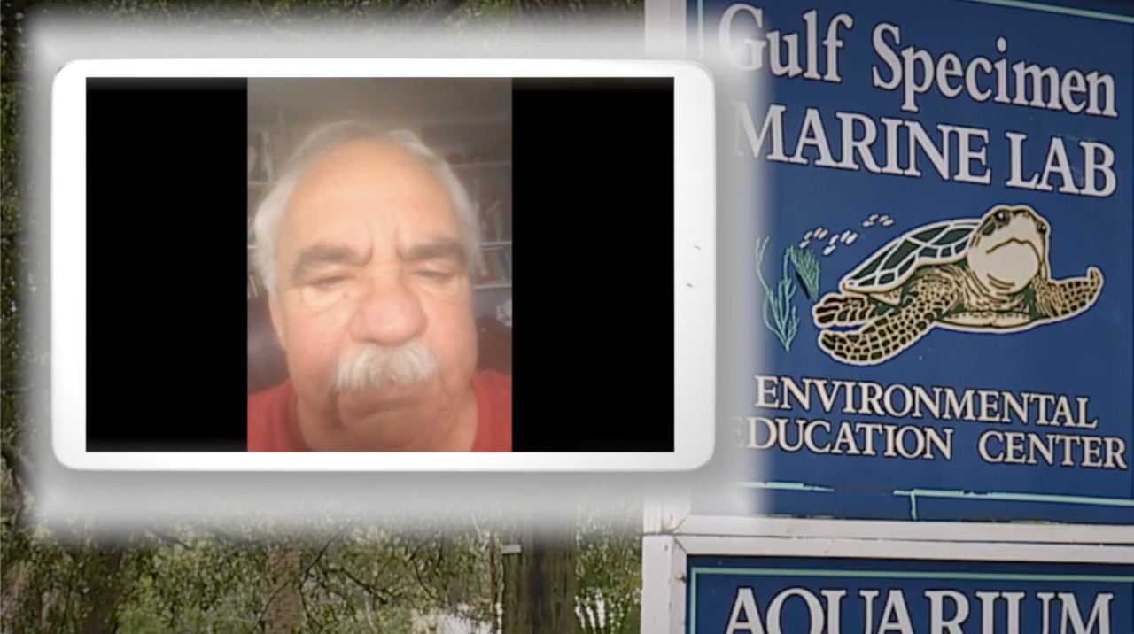 Jack Rudloe of Gulf Specimen Marine Lab on Zoom