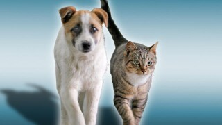 Preparation for your pets