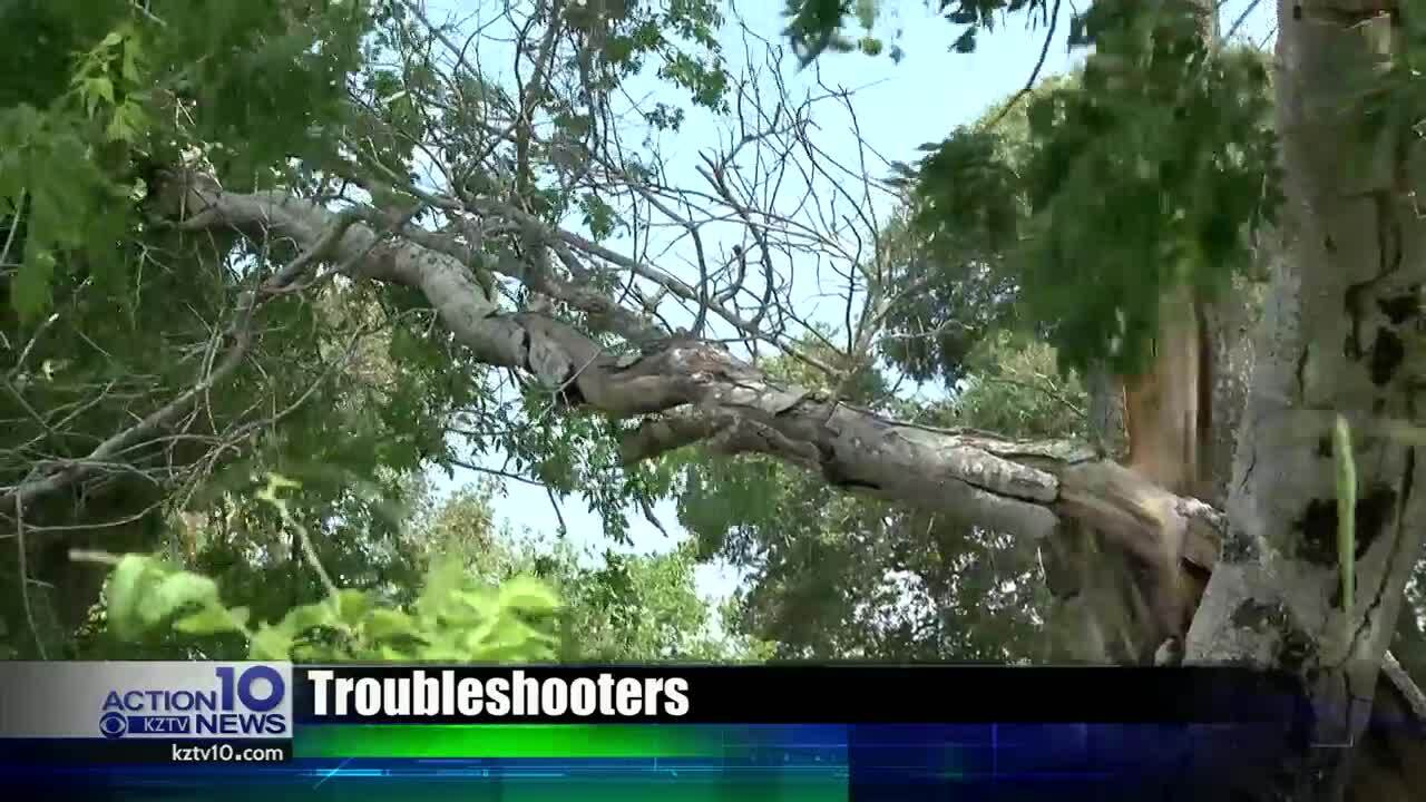 Troubleshooters aims to help a man with some hanging tree limbs from his neighbor's property.