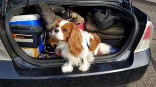 Pet finder - Jasper