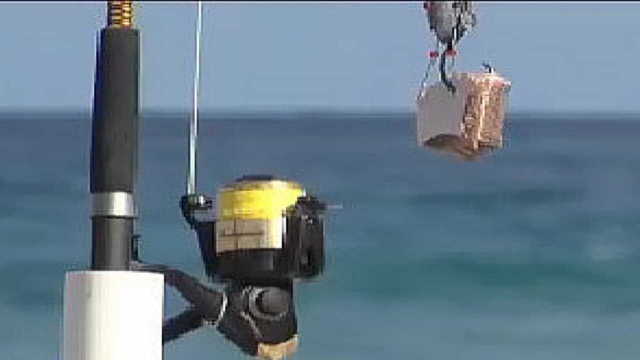 Palm Beach could tighten shark fishing rules