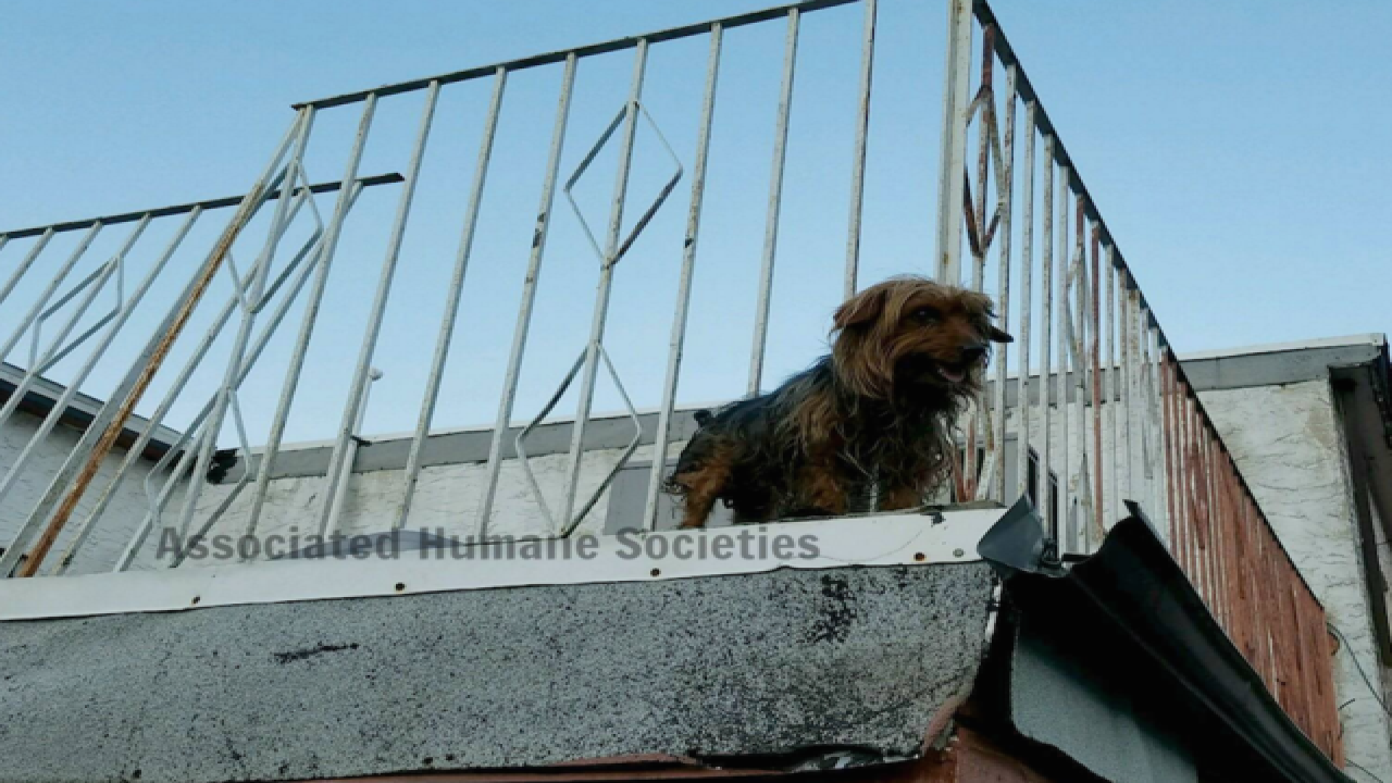 Dogs rescued from hot New Jersey rooftop