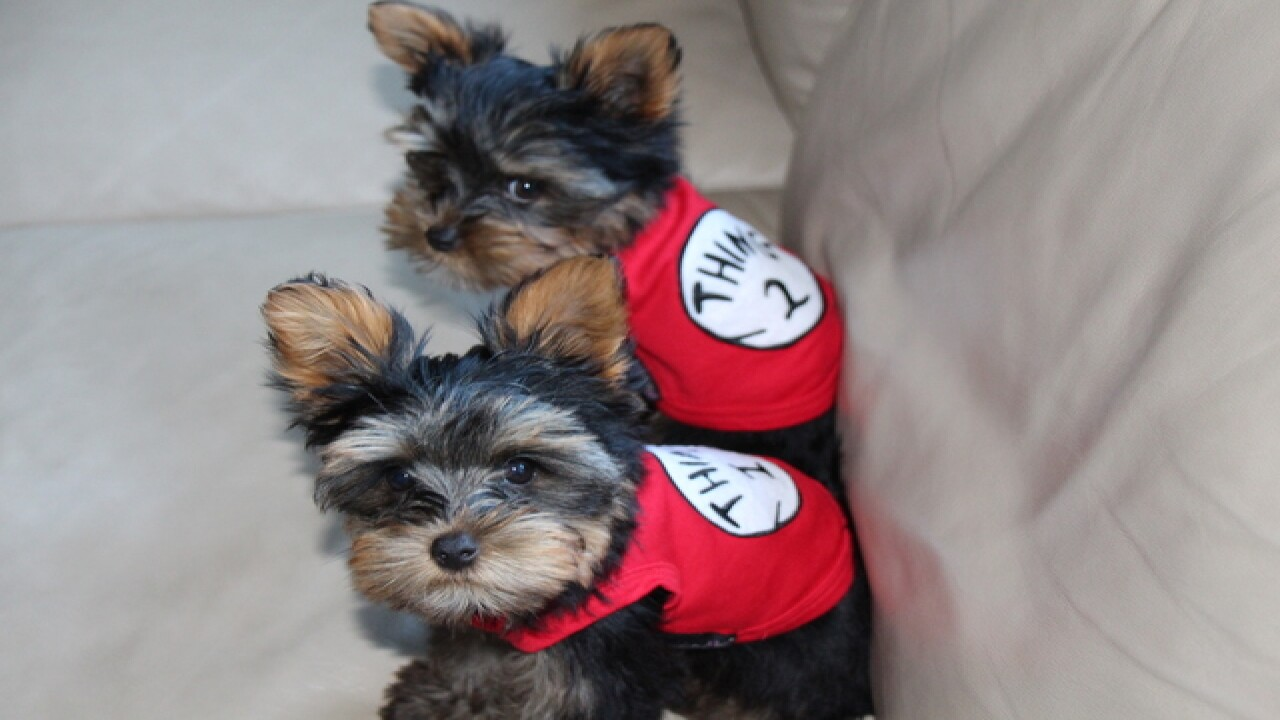 National Puppy Day: Your cute puppy photos