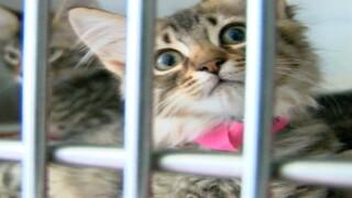 kitten at SPCA Suncoast