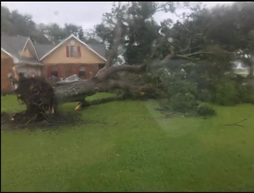 Pecan tree down in Jeanerette of Hwy 90. Courtesy of Jacob Landry.