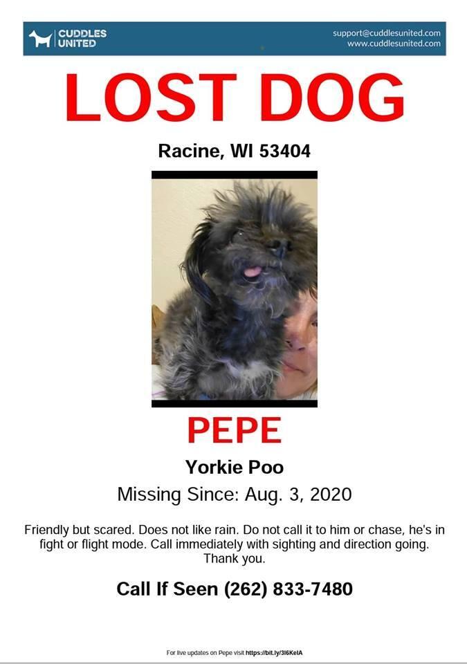 0803 Pepe Yorkie Poo Senior Cuddles United Poster.jpg