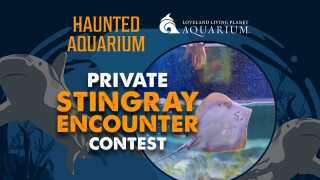 Loveland Living Planet Haunted Aquarium Contest
