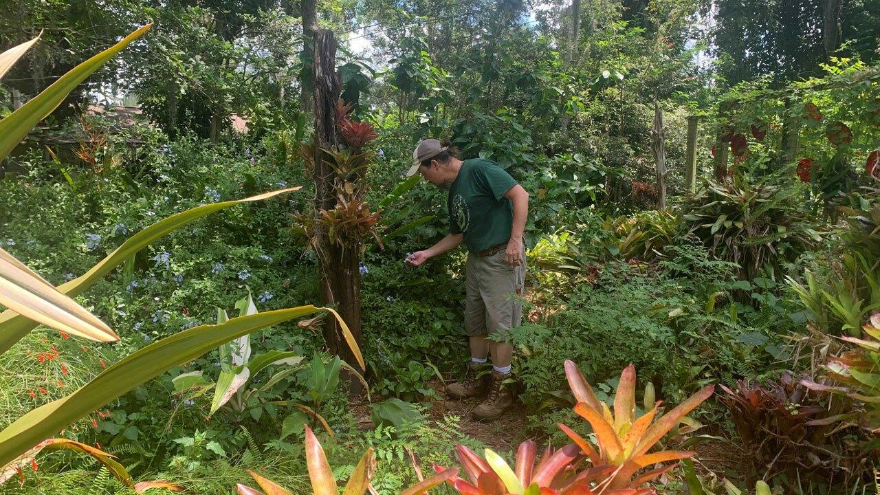 Eileen-Hart's-botanical-garden-WFTS-BOYD.jpg