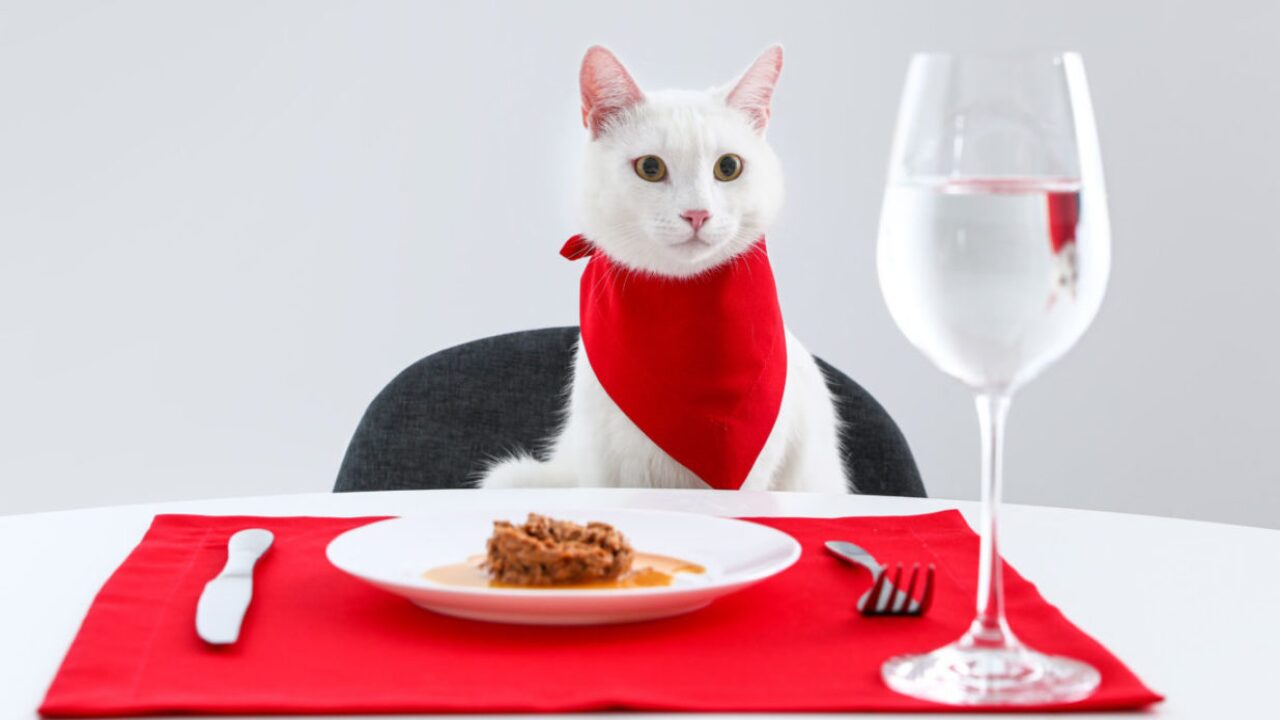 Fancy Feast Released A Free Cookbook Of Recipes For Humans Inspired By Their Cat Food Flavors