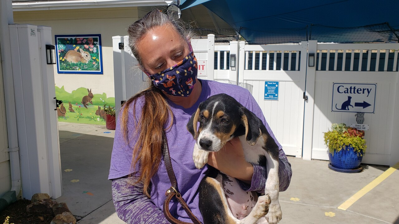 19 Mexican dogs arrive in Encinitas