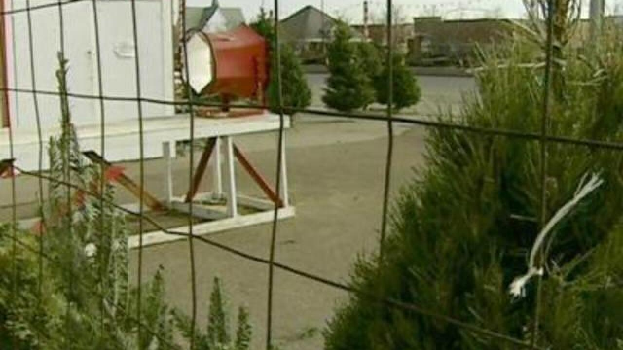 Christmas Tree Lots.Christmas Tree Shortage Has Family Owned Lots Worried About