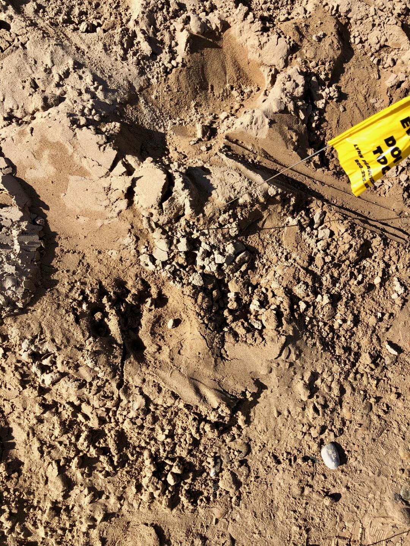 Photos: Bear attacks sleeping teen at southern Utahcampground