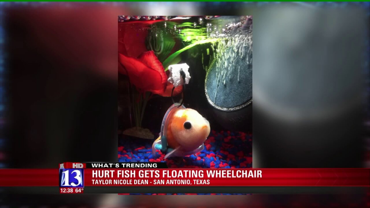 Man makes water wheelchair for disabledgoldfish