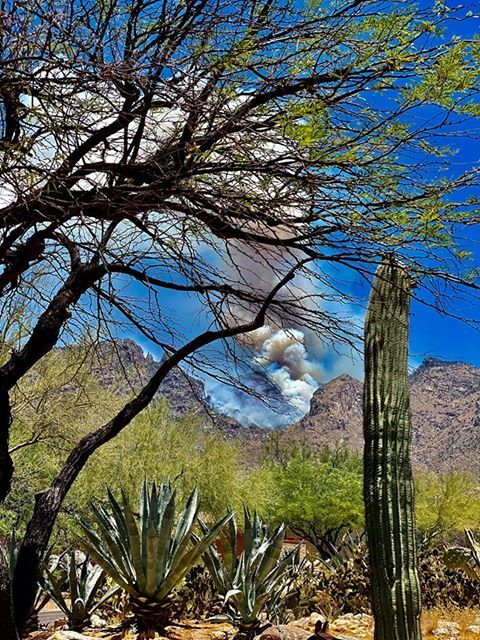 Heavy smoke roils from the mountain tops where the Bighorn Fire rages in the Catalina Mountains