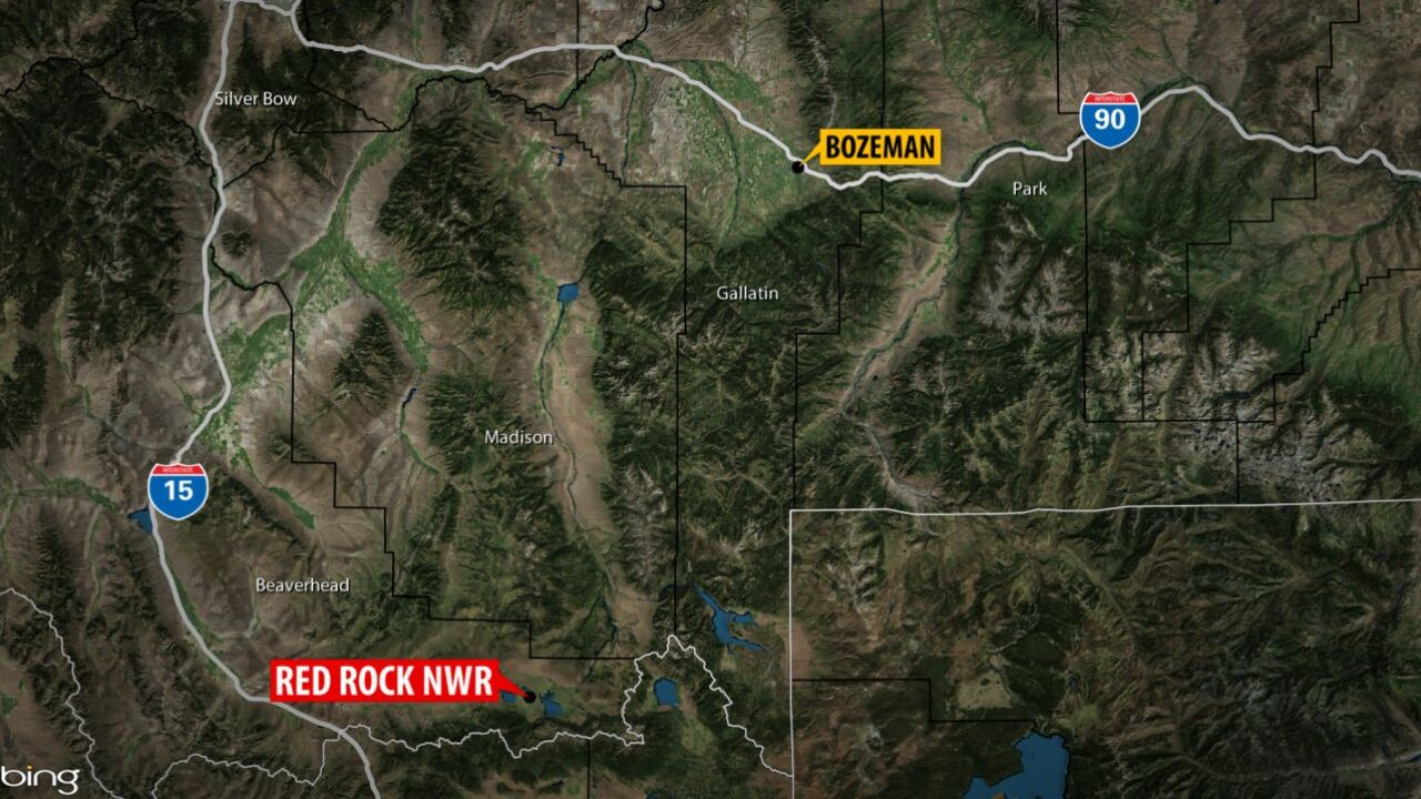 Grizzly bear attacks person in SW Montana