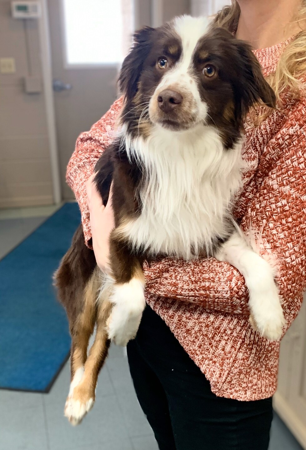 Nemo, dog found at top of Rabbit Ears Pass, has new home