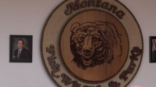 Montana FWP seeks feedback on current Automated License System